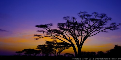 Sunrise over the Serengeti Plain - Serengeti Plain, Tanzania – Harold Green