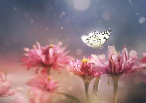 Butterfly-on-Pink-flower1