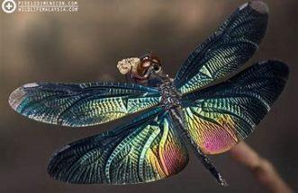 dragonfly.5